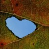 Leaf with a heart-shaped hole in it
