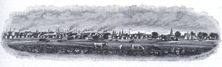 Drawing of cow and buildings of chicago in 1845