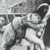 illustration of dog carrying child to safety